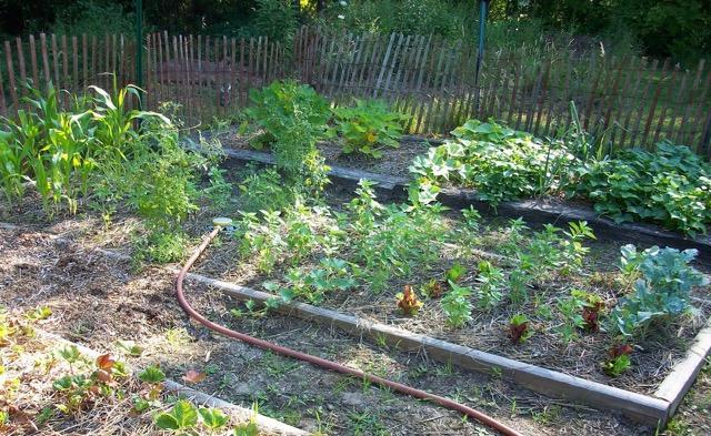 Herb garden on raised beds.