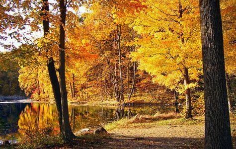 Fall Scenery. Photo by Nicholas Tonelli.
