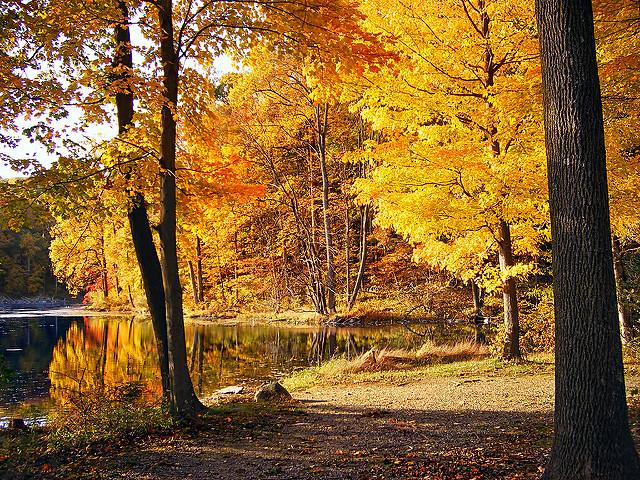 Fall+Scenery.+Photo+by+Nicholas+Tonelli.